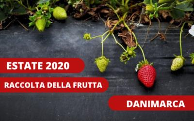 Raccolta della frutta in Danimarca